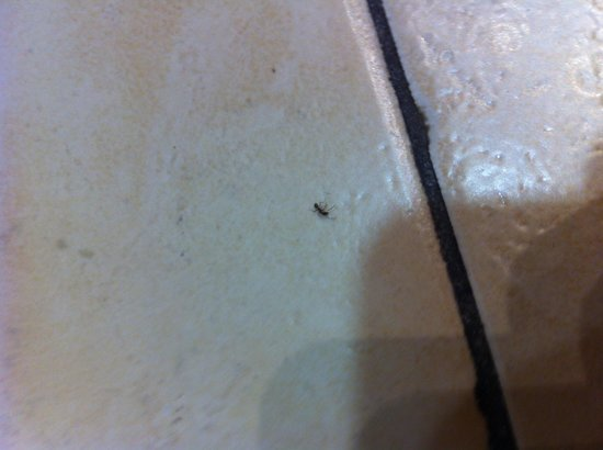 Michelangelo Hotel: Not only one. Many bugs in washroom.