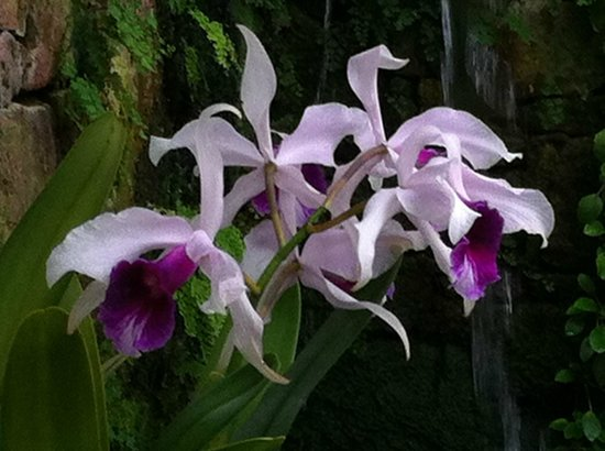 Eric Young Orchid Foundation: Elegance and delicacy