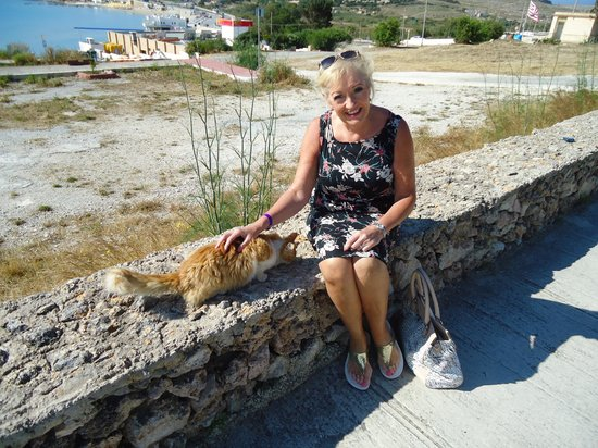 Mellieha Bay Hotel: Freddie the local cat likes titbits