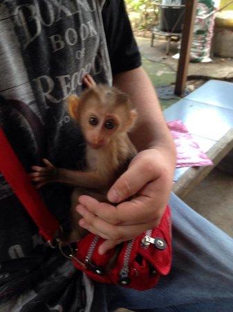 Phuket Zoo: Gorgeous Baby Monkey