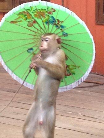 Phuket Zoo: Monkey Show
