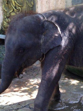 Phuket Zoo: Gorgeous Elephant