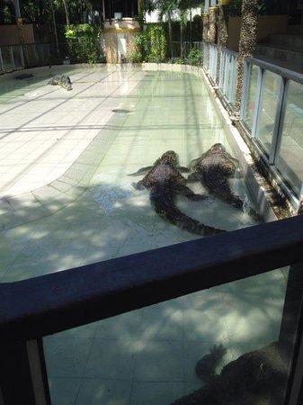 Phuket Zoo: Croc's