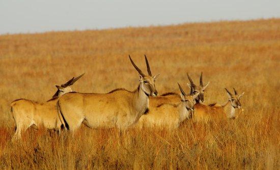 Rietvlei Nature Reserve: Eland