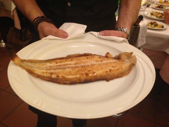 Fellini: Eine ganz frische, sehr wohlschmeckende Seezunge