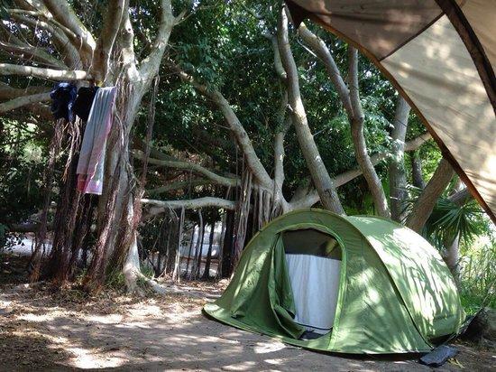 Camping Camaleon: Camping Camaleón, Caños de Meca, Spain.