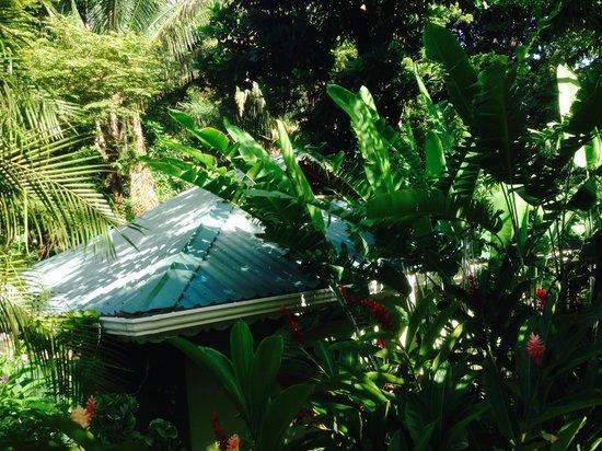 El Pequeno Gecko Verde : bungalow dans la végétation