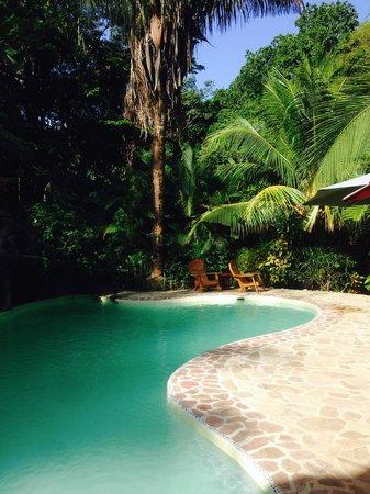 El Pequeno Gecko Verde : piscine