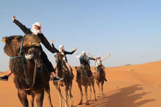 Camel Excursions Morocco : Camels!