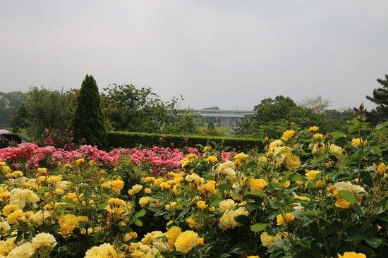Hamamatsu Flower Park: ローズガーデン