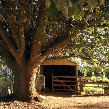 Corinella Country House : The magnificent tree...perfect for a tree house.