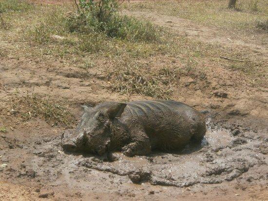 Ziwa Rhino and Wildlife Ranch: Wat lig ik lekker
