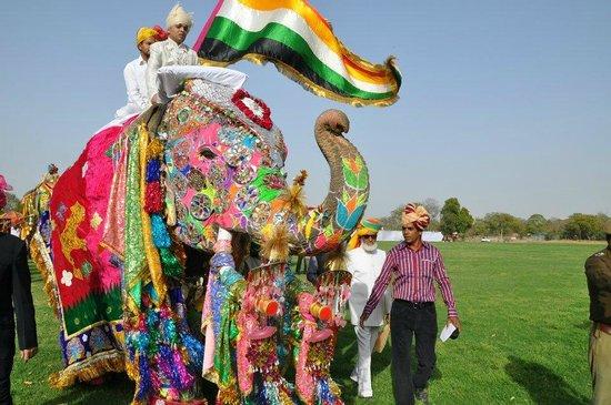 Image result for jaipur elephant festival