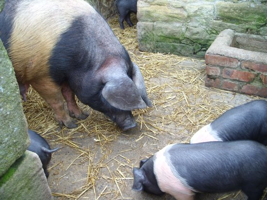 Beamish Museum: the farm