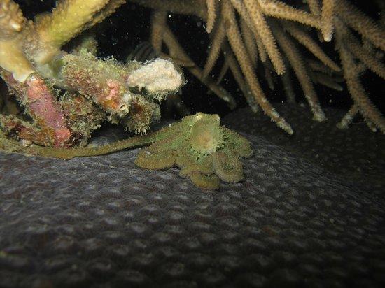 Crystal Dive Resort : ночной дайв