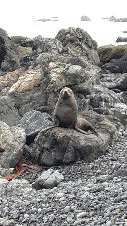 Cape Palliser Lighthouse : A seal that was curious