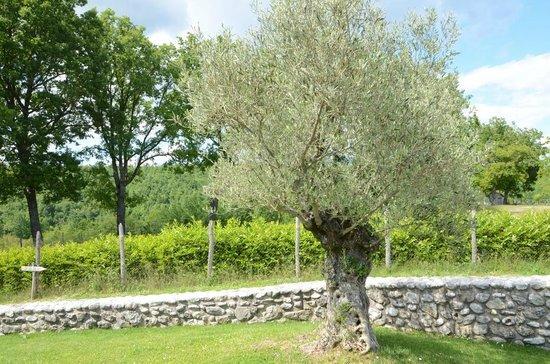 Agriturismo Antico Borgo di Vallignano: Natura