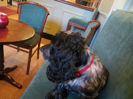 Killiecrankie Hotel: Beanie the working dog