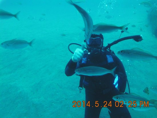 Submarine Adventure: duiker