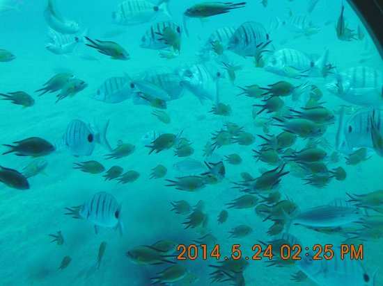 Submarine Adventure: divers-vis