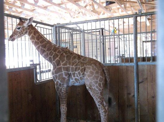 Kalahari Resorts & Conventions : The african safari