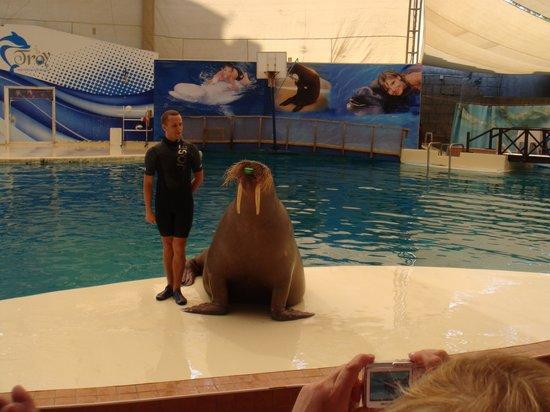 Aqualand & Dolphinland: Моржиха2