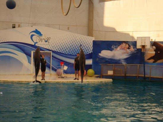 Aqualand & Dolphinland: Дельфины