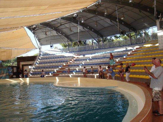 Aqualand & Dolphinland: дельфинарий