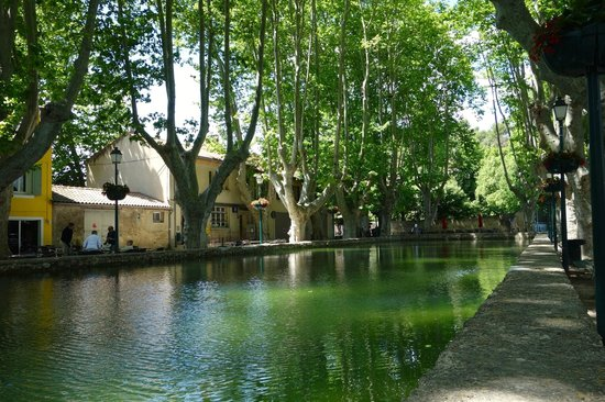 Discover Provence-Day Tours: Beautiful 200 year old Plane trees