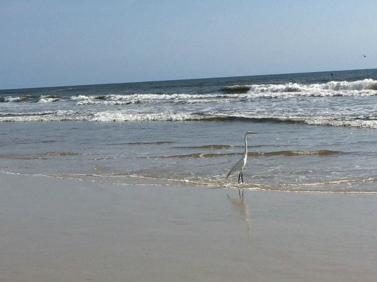Daytona Beach Regency : A friend on the beach