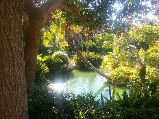 Barcelo Asia Gardens Hotel & Thai Spa : Jardines