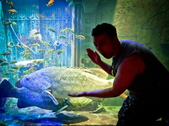 Marine Habitat at Atlantis: Fish of all sizes