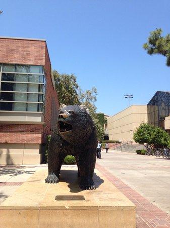 UCLA Store: マスコットのクマさんはショップの前に居ます