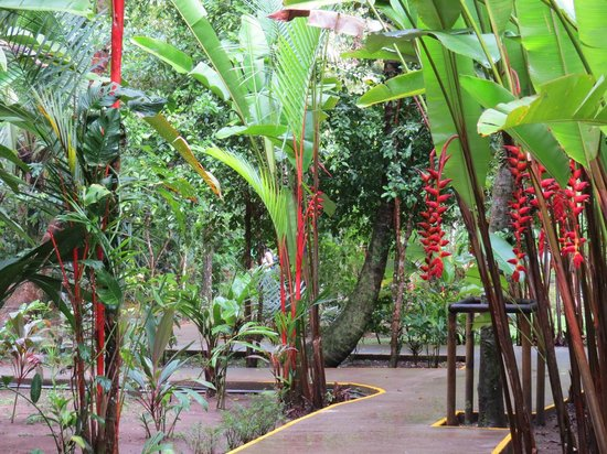 Rana Roja Lodge: the grounds