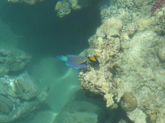 Fantazia Resort : Pesce pappagallo e pesce chirugdo fotografati dal pontile