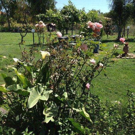 B&B Lemontree gard'n : il giardino