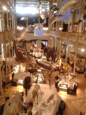 Museo Nacional de Escocia: Animal section