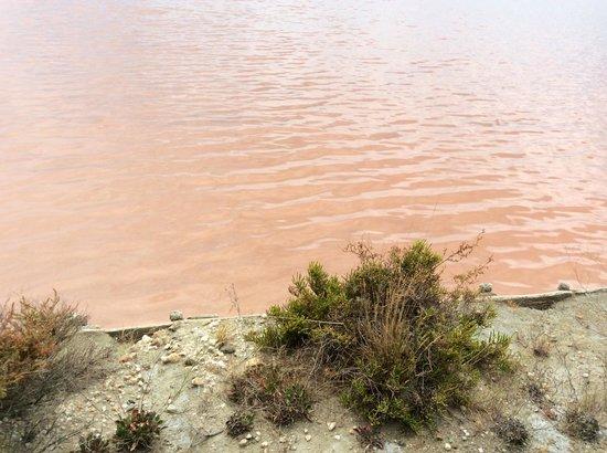 Salin d'Aigues-Mortes : Che bel colore rosa