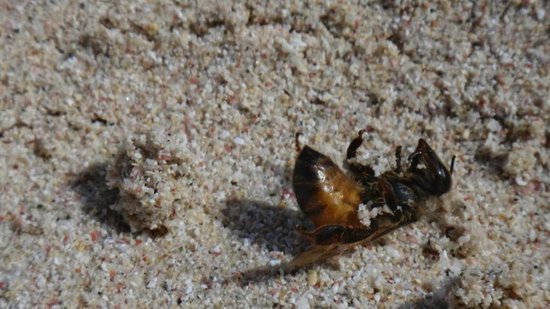 Playa Flamenco: Watch out for bees on the beach, they still sting!