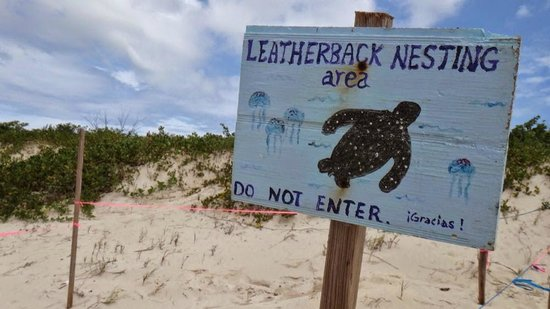 Playa Flamenco: Turtle nesting areas marked off