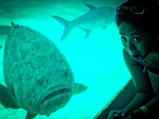 Marine Habitat at Atlantis: D-: