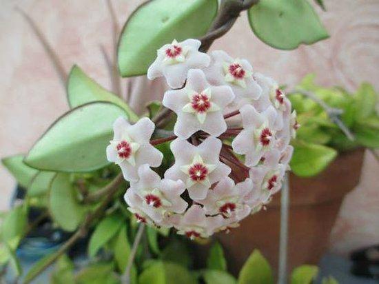 piante grasse in fiore - Foto di Agriturismo il Nuraghe, Muravera - TripAdvisor