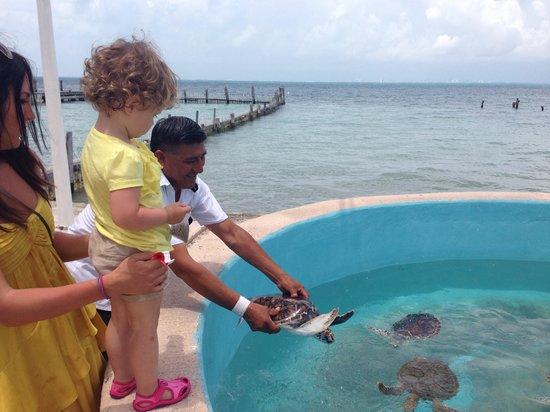 Tortugranja (Turtle Farm): Fun with the turtles