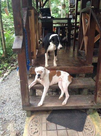 Pachamama Jungle River Lodge: Linda and Latice
