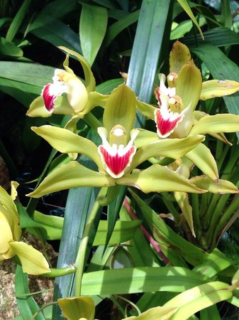 Eric Young Orchid Foundation, Jersey