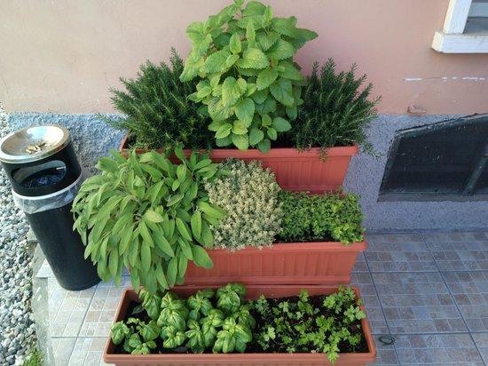 B&B Pozzo dei Desideri: piante aromatiche
