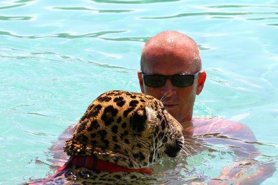 Little French Key: Swimming w/ Simba