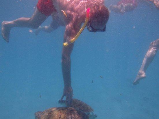 Calabaza Sailing Cruises: More turtles