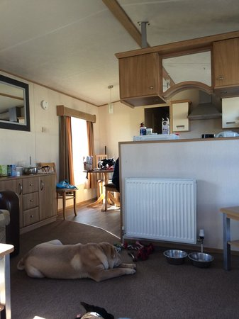 Chichester Lakeside Holiday Park - Park Holidays UK: Our pet friendly gold plus very nice