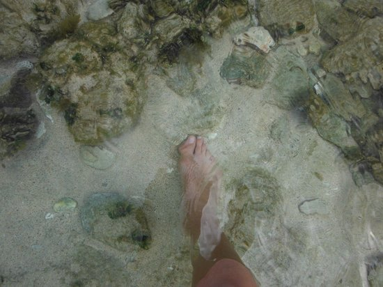 Grenadian by Rex Resorts : Transparent water
